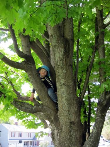 Lex in a tree