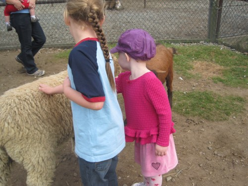 petting a sheep