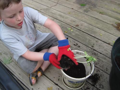 lex planting