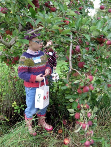 apple picking