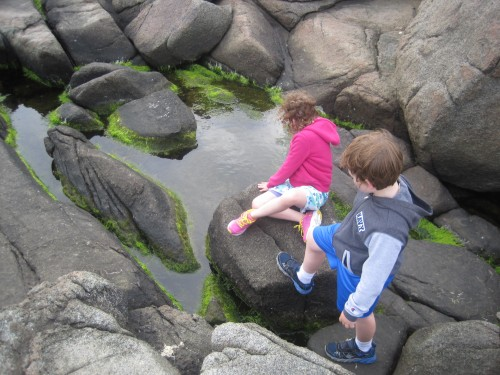We found several tide pools among the giant rocks by the shore.