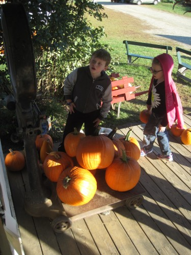 weighing pumpkins