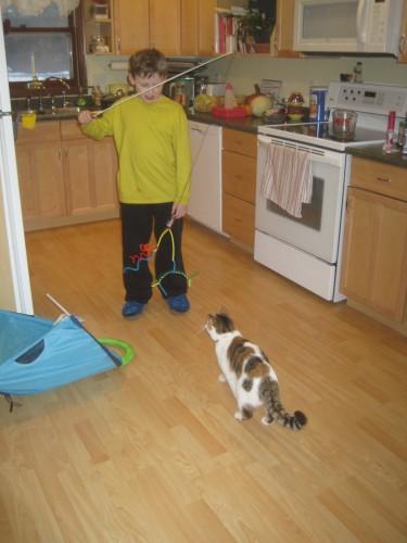 cat toy p1