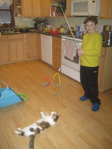 cat toy p2