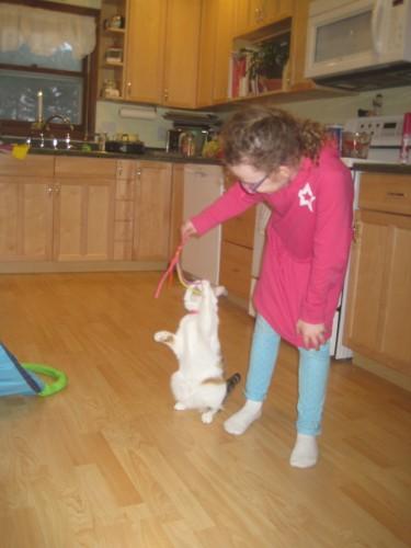 cat toy p3