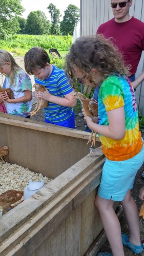 Playing with the chickens.  Lex decided they feel soft, but weird.